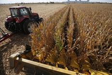 Un carro de granos conduce a través de un campo de maíz durante la cosecha en Minooka. Imagen de archivo, 25 septiembre, 2014.  La cosecha de maíz del 2014 en Estados Unidos sigue en niveles récord pero estará levemente por debajo de las recientes expectativas del mercado, según datos del Gobierno publicados el lunes, lo que podría impulsar los alicaídos precios del cereal. REUTERS/Jim Young