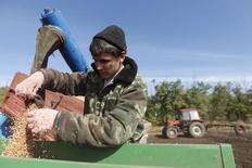 Un hombre pone semillas en una sembradora en el campo de Beshpagir, al noreste de Stavropol. Imagen de archivo, 4 octubre, 2014. Rusia, uno de los principales exportadores mundiales de trigo, planea imponer un arancel sobre las exportaciones de granos, dijeron el lunes algunos responsables, una iniciativa que sigue a restricciones informales por medio de controles de calidad la semana pasada. REUTERS/Eduard Korniyenko