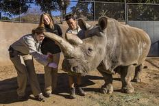 Associate veterinarian Meredith Clancy (L) collects mucus samples from Nola, a 40-year-old northern white rhino, as keepers Kim Millspaugh and Mike Veale(R) look on during a veterinary exam at the San Diego Zoo Safari Park in California, December 29, 2014.  REUTERS/Ken Bohn/San Diego Zoo Safari Park/Handout