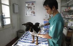 Le laboratoire vétérinaire français Virbac a bouclé l'acquisition pour 410 millions de dollars (342 millions d'euros) de deux antiparasitaires pour chien à l'américain Eli Lilly, une opération qui va lui permettre de se renforcer sur un territoire et un segment de marché stratégiques. /Photo d'archives/REUTERS/Kham
