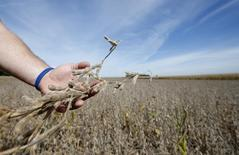 REUTERS/Jim Young (UNITED STATES  - Tags: AGRICULTURE BUSINESS COMMODITIES)