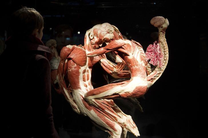 berlin has a new museum, with dead bodies, Muscles