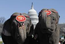 Elephants from the Ringling Bros and Barnum and Bailey Circus parade in front of the U.S. Capitol Building in Washington, in this file photo taken March 16, 2010.  REUTERS/Jason Reed