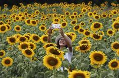 """Una mujer se toma una """"selfie"""" en un campo de girasoles en Lopburi, Tailandia, nov 2 2014. El Gobierno militar de Tailandia advirtió el lunes a las mujeres que publicar """"selfies"""" mostrando la parte inferior de sus pechos- una moda que se ha expandido en las redes sociales - podría vulnerar las leyes informáticas del país.  REUTERS/Chaiwat Subprasom"""