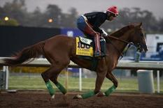 Oct 30, 2014; Santa Anita, CA, USA; California Chrome works out in the morning to prepare for the 31st Breeders Cup World Championships at Santa Anita Park. Mandatory Credit: Richard Mackson-USA TODAY Sports