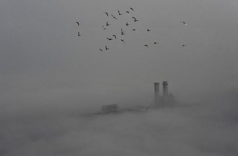 Birds fly across the sky on a polluted day in Wuhan, Hubei province, February 16, 2015. REUTERS/Stringer