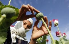 A boy works at a poppy field in Jalalabad province April 7, 2013. REUTERS/Parwiz
