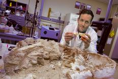 Vertebrate paleontologist Michael D'Emic is shown in this undated handout photo provided by Stony Brook University in Stony Brook, New York, May 28, 2015, with a fossil of the meat-eating dinosaur Majungasaurus, dug up by Stony Brook University field crews.  REUTERS/John Griffin/Stony Brook University/Handout via Reuters
