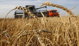 Комбайн в пшеничном поле в Красноярском крае. 6 сентября 2014 года. Российское правительство одобрило введение новой экспортной пошлины на пшеницу с 1 июля с целью ограничить вывоз зерна в случае резкого падения курса рубля, сообщило правительство в пятницу. REUTERS/Ilya Naymushin