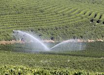 Plantação de café senda irrigada em fazenda, em Santo Antônio do Jardim. 07/02/2014 REUTERS/Paulo Whitaker