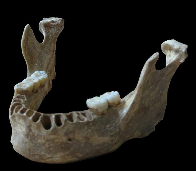 A jawbone unearthed in Romania of a man who lived about 40,000 years ago is shown in this handout photo provided by Max Planck Institute for Evolutionary Anthropology in Leipzig, Germany June 21, 2015. REUTERS/MPI f. Evolutionary Anthropology/Paabo/Handout via Reuters