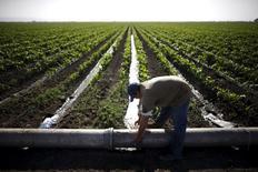 Un trabajador arregla una tubería de irrigación en un maizal en Los Banos, Estados Unidos, 5 de mayo de 2015. El Departamento de Agricultura de Estados Unidos (USDA) recortó más de lo esperado el viernes sus pronósticos para los suministros de maíz y soja que quedarán al finalizar el año comercial 2014/2015, lo que disparó los precios de los futuros de ambas materias primas. REUTERS/Lucy Nicholson