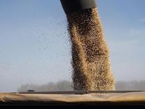 Una cosechadora descargando granos de soja dentro de un camión en Chacabuco, Argentina, abr 24 2013. Los caminos que llevan a algunas de las plantas agroexportadoras más importantes del mundo, en el corazón agrícola de Argentina, son angostos y están llenos de baches.        REUTERS/Enrique Marcarian