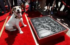 Cachorro Uggie deixa sua marca no Teatro Chinês de Grauman, em Hollywood. 25/6/2012.   REUTERS/Mario Anzuoni