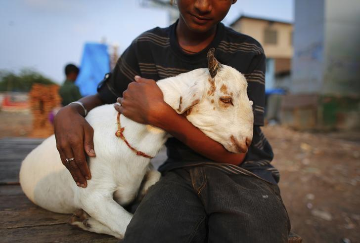 A goat named Salman sits with its owner at a slum in Mumbai October 28 , 2013. REUTERS/Danish Siddiqui/Files