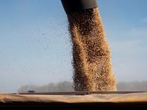 Una máquina cargando granos de soja en un camión en Chacabuco, Argentina, 24 de abril de 2013. Las ventas de semillas de maíz y de soja caerán en Argentina hasta un 40 por ciento en tasa interanual, porque los agricultores están sembrando menos tierras con el cereal y están usando cada vez más semillas propias o del mercado negro para la oleaginosa, dijo un ejecutivo del sector. REUTERS/Enrique Marcarian