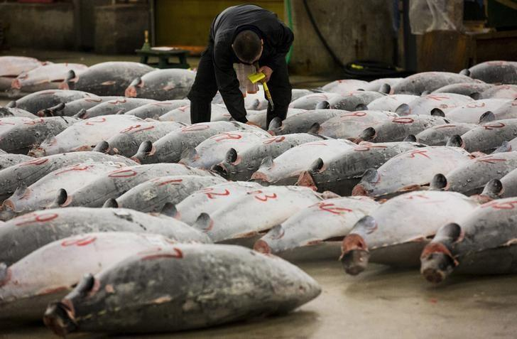 A wholesaler checks the quality of frozen tuna displayed at the Tsukiji fish market before the New Year's auction in Tokyo January 5, 2015.  REUTERS/Thomas Peter