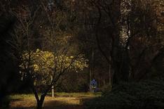 Мужчина сидит на скамейке в парке в Москве 12 октября 2013 года. Выходные в Москве будут теплыми, свидетельствует усредненный прогноз, составленный на основании данных Гидрометцентра России, сайтов intellicast.com и gismeteo.ru. REUTERS/Maxim Shemetov