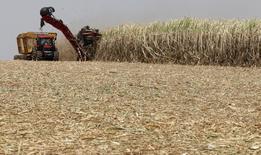 Plantação de cana de açúcar em Valparaíso, em São Paulo. 18/09/2014  REUTERS/Paulo Whitaker (BRAZIL - Tags: BUSINESS TRANSPORT COMMODITIES ENERGY)