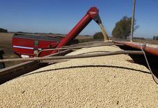 Granos de soja siendo cargados en un camión en la ciudad de Chacabuco, Argentina, 24 de abril de 2013. El área sembrada con soja 2015/16 en Argentina sería de 19,8 millones de hectáreas, un 1 por ciento por debajo de los 20 millones del ciclo previo, debido a una caída en los márgenes de ganancia del cultivo, dijo el lunes la Bolsa de Cereales de Buenos Aires en su informe de precampaña de la oleaginosa. REUTERS/Enrique Marcarian