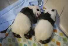 Twin giant panda cubs born to mother Er Shun are seen in this undated handout picture taken at the Toronto Zoo in Toronto, Ontario. REUTERS/The Toronto Zoo/Handout via Reuters