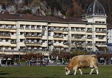 A cow feeds on grass in front of the Victoria Jungfrau hotel in the Swiss alpine resort Interlaken, Switzerland November 11, 2015. Picture taken November 11, 2015. REUTERS/Ruben Sprich