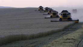 Комбайны убирают урожай пшеницы с поля агропредприятия Солгонское близ поселка Тальники Красноярского края. 27 августа 2015 года. Минсельхоз РФ прогнозирует урожай зерна в размере 100,8 миллиона тонн в 2016 году против ожидаемого по итогам текущего года урожая объемом 103,4 миллиона тонн, сообщило министерство в среду Рейтер. REUTERS/Ilya Naymushin