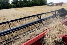 Una cosechadora combinada en un trigal en General Belgrano, Argentina, dic 18, 2012. Argentina dijo el miércoles que la cosecha de trigo 2015/16 alcanzará los 10,9 millones de toneladas, desde los entre 10 y 12 millones proyectados en noviembre, luego de elevar en 2,5 por ciento su estimación del área sembrada con el cereal, a 4,1 millones de hectáreas.   REUTERS/Enrique Marcarian