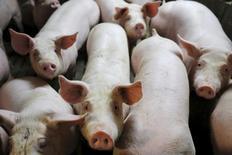 El regulador farmacéutico europeo inició el lunes una revisión del uso en ganadería de un antibiótico de último recurso denominado colistina después de que una investigación internacional determinara evidencias alarmantes de un gen que genera una bacteria resistente al fármaco. En la imagen se ve a cerdos en un establo de una granja en la localidad de Chapelle-Caro, la Bretaña francesa el 2 de septiembre de 2015. REUTERS/Stephane Mahe