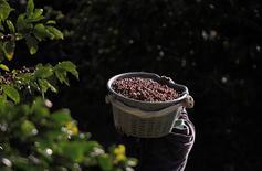 Un menor transporta granos de café recién cosechados en una plantación en San Isidro de Alajuela, Costa Rica, ene 8, 2013. Las exportaciones de café de Costa Rica bajaron casi un 20 por ciento interanual en enero a 74.753 sacos de 60 kilogramos, dijo el lunes el instituto nacional Icafé.  REUTERS/Juan Carlos Ulate