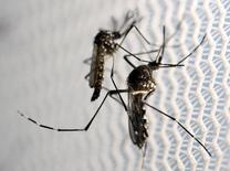 Mosquitos Aedes aegypti vistos em laboratório de Campinas. 02/02/2016 REUTERS/Paulo Whitaker