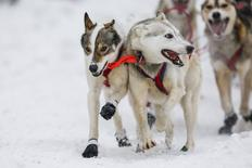 A team heads out at the ceremonial start of the Iditarod Trail Sled Dog Race to begin their near 1,000-mile (1,600-km) journey through Alaska's frigid wilderness in downtown Anchorage, Alaska March 5, 2016.  REUTERS/Nathaniel Wilder