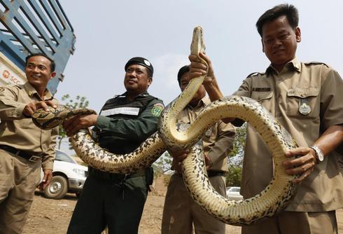 Smuggled animals