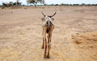 El Nino drought hits Africa
