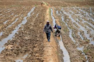 North Korean farm life