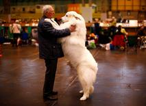 Arthur Ward stands with his Pyrenean Mountain Dog Cody during the first day of the Crufts Dog Show in Birmingham, central England, March 5, 2015. REUTERS/Darren Staples/File Photo
