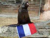Watson the sea-lion poses with a French flag at the Amneville Zoo near Metz, France, June 20, 2014, in this handout photo provided by the zoo on June 10, 2016. Zoo Amneville/Handout via Reuters