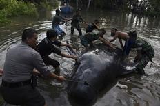 Pessoas tentando remover baleia morta de manguezal em Probolinggo, Indonésia.    16/06/2016       Antara Foto/Zabur Karuru/via REUTERS