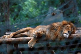 Venezuela's hungry zoo animals