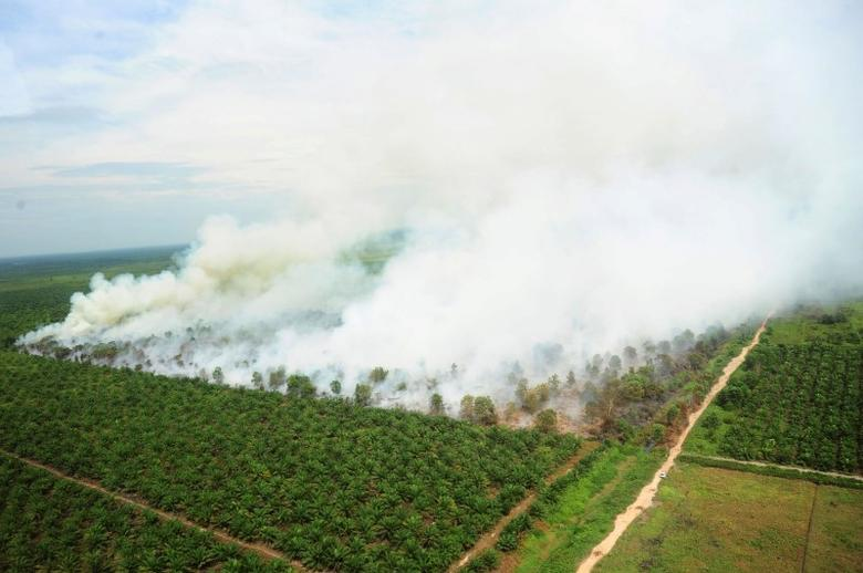 A wildfire is seen from a Ministry of Environment and Forestry helicopter over Kubu Raya, near Pontianak, West Kalimantan, Indonesia August 25, 2016, in this photo taken by Antara Foto.  Antara Foto/Jessica Helena Wuysang/via REUTERS