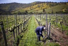 Un hombre trabaja en las instalaciones de la viña Matetic en Chile en el valle de Casablanca, al oeste de la ciudad de Santiago, foto tomada el 30 de octubre de 2015. REUTERS/Ivan Alvarado