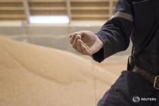 Сотрудник Potash Corp проверяет качество удобрений на одном из складов в Саскатуне, Канада 10 октября 2013 года. Канадские Agrium Inc и Potash Corp of Saskatchewan Inc ведут переговоры о слиянии, сообщили обе компании во вторник, что может привести к появлению крупнейшего игрока на мировом рынке удобрений и сельскохозяйственного ритейла на фоне трудностей, переживаемых сектором. REUTERS/David Stobbe