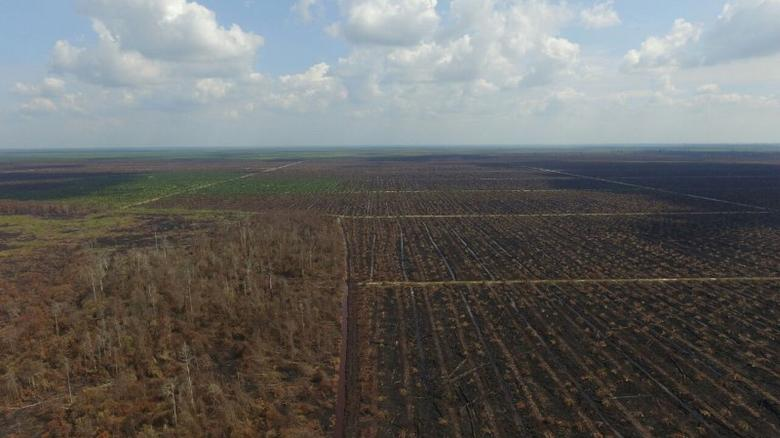 Aerial view of forest burned illegally at a peatland area in Rokan Hulu, Riau province, Sumatra, Indonesia September 2, 2016.  Picture taken September 2, 2016.  Ministry of Environment and Forestry Republic of Indonesia/Handout via REUTERS