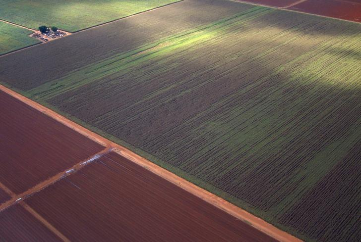 Sugar cane and other crops can be seen on farms near the town of Bundaberg in Queensland, Australia, June 9, 2015.    REUTERS/David Gray/Files