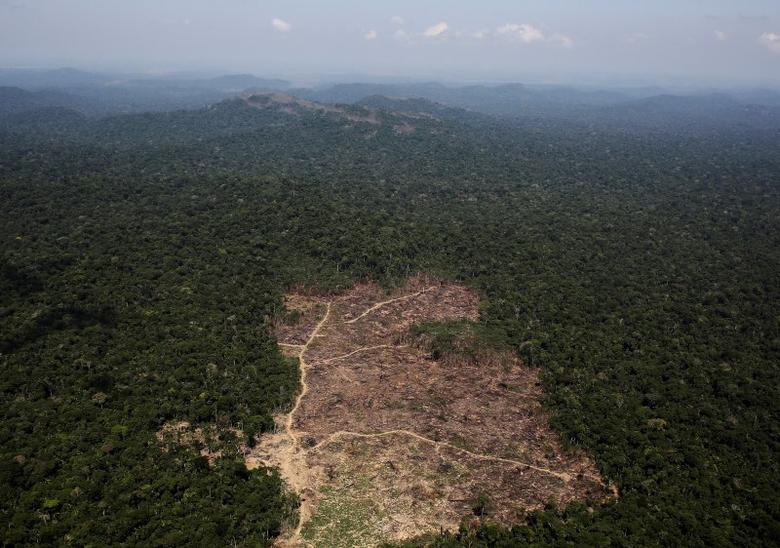 An aerial view of a tract of Amazon jungle recently cleared by loggers and farmers near the city of Novo Progresso, Brazil September 22, 2013. Picture taken September 22, 2013. REUTERS/Nacho Doce/File Photo