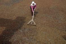 Una trabajadora en el proceso de secado de café robusta en Muntung, Java, sep 14, 2016. Los futuros de café subieron el miércoles y tocaron máximos de 19 meses, ante una menor oferta de la variedad robusta por la pobre cosecha en Brasil mientras los operadores seguían atentos a la posibilidad de una producción más baja en Vietnam esta temporada.  Fotografía de Antara Foto.  Antara Foto/Anis Efizudin/ via REUTERS IMAGEN PROPIEDAD DE TERCEROS, SOLO PARA USO EDITRORIAL