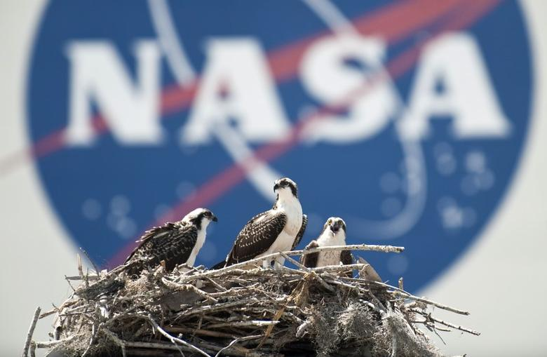 A family of Osprey are seen outside the NASA Kennedy Space Center Vehicle Assembly Building (VAB) in Cape Canaveral, Florida  on Thursday May 13, 2010.  REUTERS/Bill Ingalls/NASA/Handout  Y