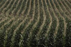 Plantação de milho na cidade norte-americana de Dewitt, Iowa.     12/07/2012         REUTERS/Adrees Latif/Files