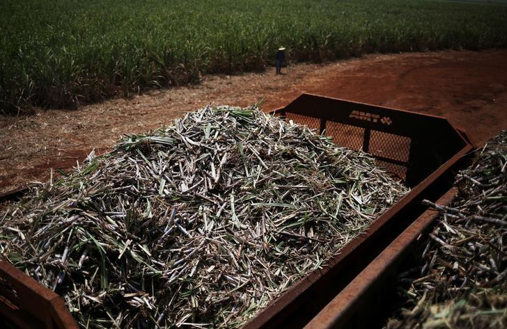 Sugar cane is pictured into a truck on the property of Grupo Moreno in Ribeirao Preto, northeastern region of the state of Sao Paulo, Brazil, September 15, 2016. Picture taken September 15, 2016. REUTERS/Nacho Doce