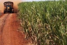 Un camión en un cañaveral de Grupo Moreno en Ribeirao Preto, Brasil, sep 15, 2016. El principal cinturón de caña de azúcar del centro-sur de Brasil probablemente producirá una cosecha más pequeña la próxima temporada, pese a un panorama de mercado alentador para el azúcar, dijo el martes un grupo de la industria.   REUTERS/Nacho Doce
